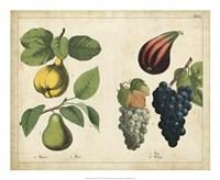 Kitchen Fruits IV Framed Print