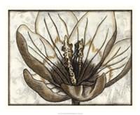"""Fresco Flowerhead IV by Nancy Slocum - 22"""" x 18"""""""