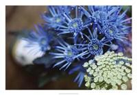 Drummond Blue Fine Art Print