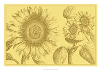 """Golden Sunflowers II by Vision Studio - 26"""" x 18"""""""