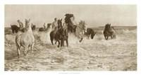 Horses Bathing Fine Art Print