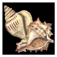"""Tandem Shells I by Jennifer Goldberger - 18"""" x 18"""""""