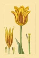 "13"" x 19"" Yellow Tulips"