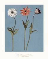 Three Daisies Fine Art Print