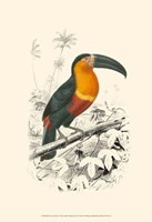 Birds of Costa Rica I Fine Art Print