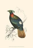 Birds of Costa Rica II Fine Art Print