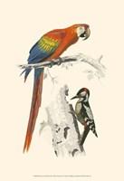 """13"""" x 19"""" Parrot Art"""