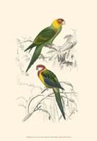 Birds of Costa Rica IV Fine Art Print