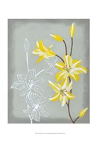 Floral Echo II Fine Art Print