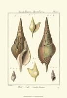 Rostellaire Shells, Pl. 411 Fine Art Print