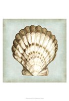 "Sea Dream Shells III by Vision Studio - 13"" x 19"""