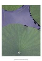 """Lotus Detail X by Jim Christensen - 13"""" x 19"""" - $12.99"""