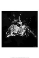 Wildlife Scratchboards VI Fine Art Print