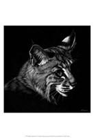 Wildlife Scratchboards IX Fine Art Print