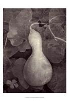 Gourd V Fine Art Print