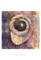 Seashell-Snail Fine Art Print