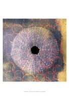 Seashell-Urchin Fine Art Print