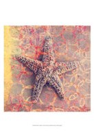 Seashell-Starfish Fine Art Print