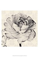 Ghost Flower I Fine Art Print