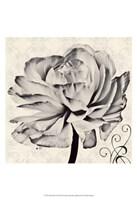 Ghost Flower II Fine Art Print