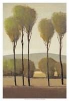 Tall Birches II Fine Art Print