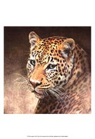 "13"" x 19"" Leopard Posters"