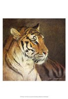 "Tiger by Chris Vest - 13"" x 19"""