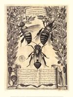 Melissographia, 1625 Fine Art Print