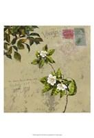 Postage III Fine Art Print