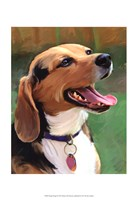 Beagle-Beagle Fine Art Print