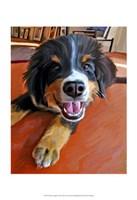 """Bernese Puppy by Robert McClintock - 13"""" x 19"""""""