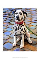 Dalmatian Puppy Fine Art Print