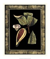 "Tropical Bounty I by Vision Studio - 16"" x 19"""
