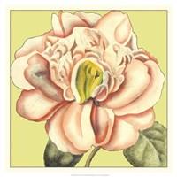 "Flower Power II by Deborah Bookman - 19"" x 19"" - $27.99"