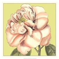 "Flower Power IV by Deborah Bookman - 19"" x 19"" - $27.99"