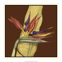 "Striking Tropical I by Jennifer Goldberger - 19"" x 19"""