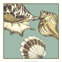 "Shell Trio on Blue III by Megan Meagher - 19"" x 19"""