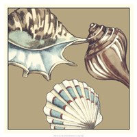 "Shell Trio on Khaki III by Megan Meagher - 19"" x 19"""