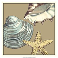 "Shell Trio on Khaki IV by Megan Meagher - 19"" x 19"""
