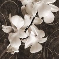 Orchid & Swirls I Fine Art Print