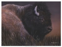 "American Icon- Bison by Kevin Daniel - 25"" x 19"""
