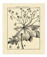Vintage Botanical Study I Fine Art Print