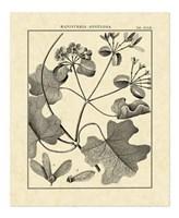 Vintage Botanical Study II Fine Art Print