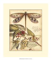 "Whimsical Dragonflies I by Vision Studio - 16"" x 19"""