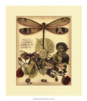 "Whimsical Dragonflies II by Vision Studio - 16"" x 19"""