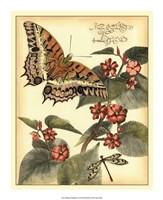 Whimsical Butterflies II Fine Art Print
