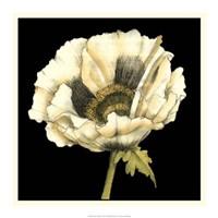 "Dramatic Poppy I by Jennifer Goldberger - 20"" x 20"""