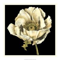 "Dramatic Poppy II by Jennifer Goldberger - 20"" x 20"""