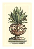 Antique Munting Aloe IV Fine Art Print