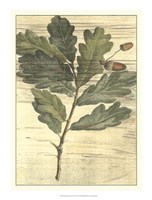 "Weathered Oak Leaves II by Desahyes - 15"" x 20"" - $21.99"